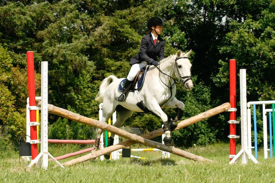 16 - Equestrian Photography