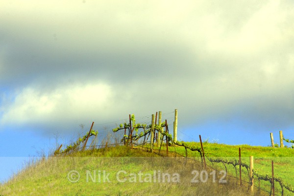 Cloud Kiss Hill - Landscapes