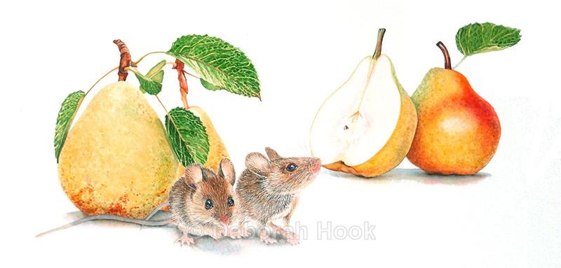 A pear of still life. - British Wildlife