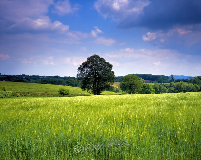 Near Stoke Lacy Herefordshire - England