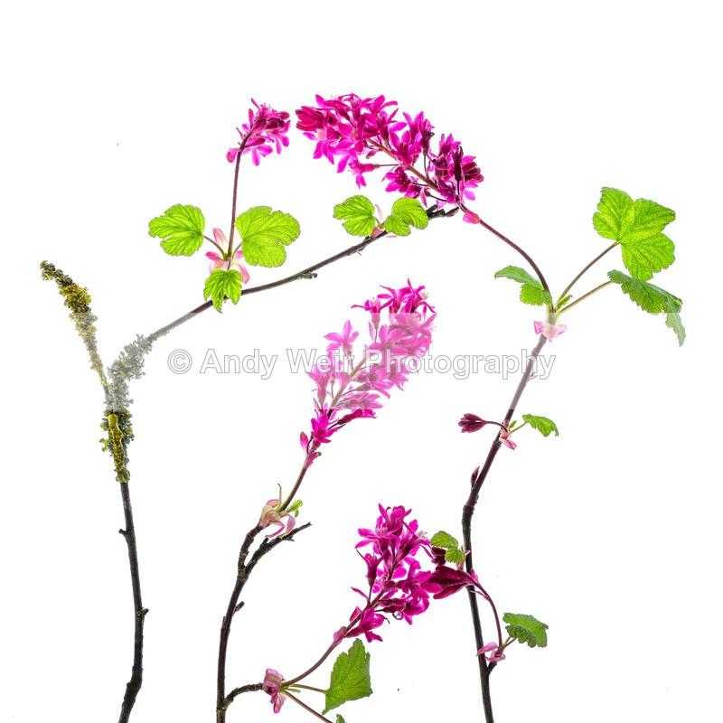 20160409-3K8A3323-4191 - Plants & Flowers