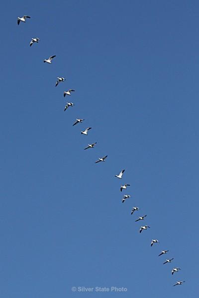 Precision - Nevada Birds