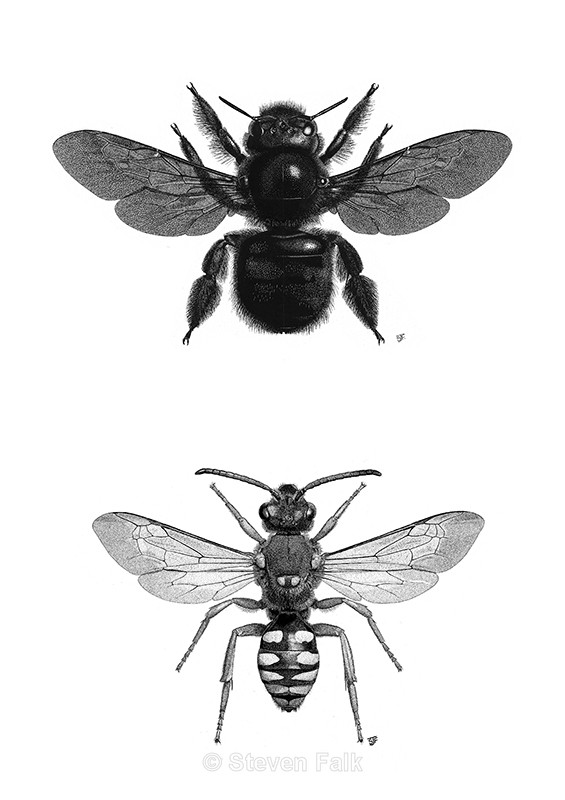 Carpenter Bee/Nomad Bee Combo - Bees