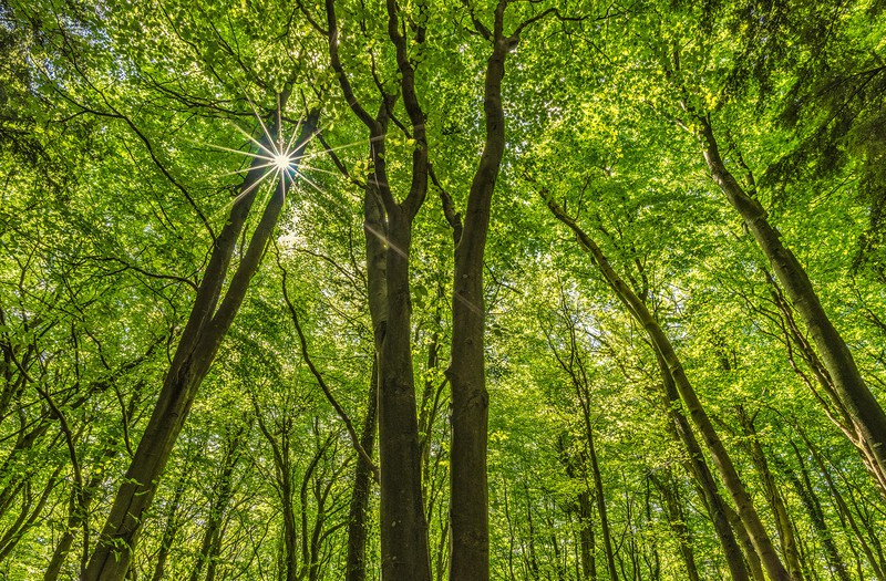 Through The Canopy - Pembrokeshire Woodland - Inland