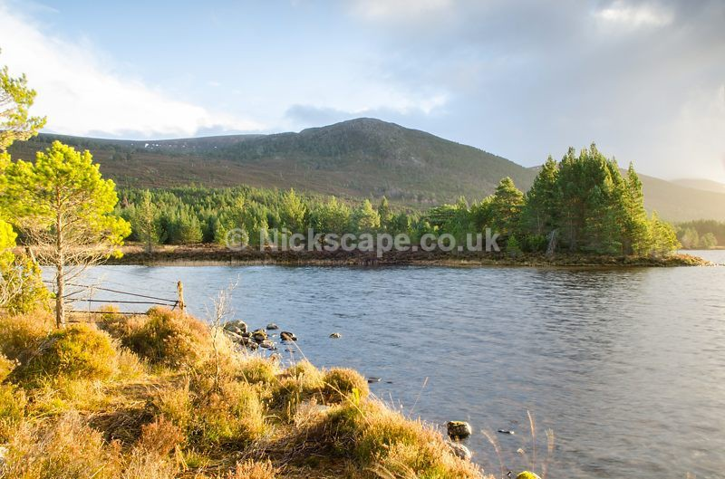 Afternoon light at Loch Gamhna | Aviemore | Cairngorms Photo Gallery | Scotland