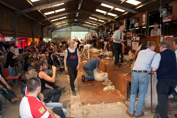 56 - Shearing Competition