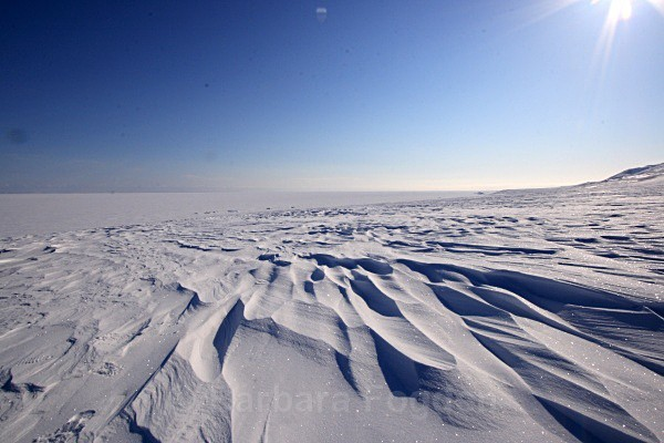 Agardhbukta 3042 - Winter in the daylight