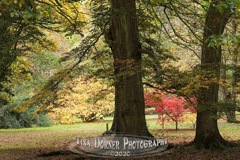 Bright Bush at Cyril Hart Arboretum. Forest of Dean. Tina Dorner Photography