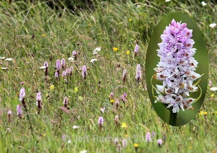 (image WF 004) - Trees, Plants, Flowers & Garden scenes
