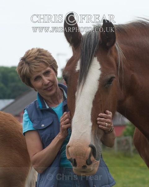 ryecroft-8 - Clydesdales 2013 Include Foals