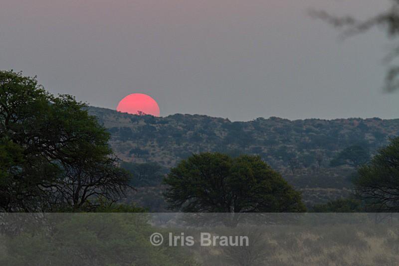 Kalahari Sunset - Landscape