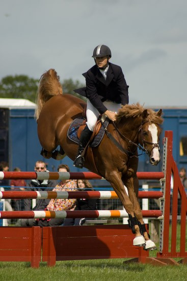 14 - Equestrian Photography