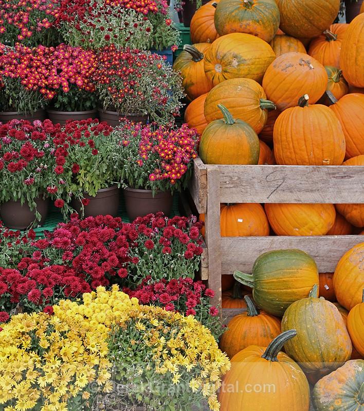 Mums the Word - Autumn Festival