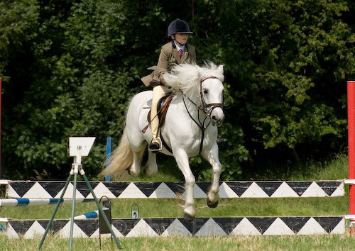 89 - Moniaive Horse Show 2008