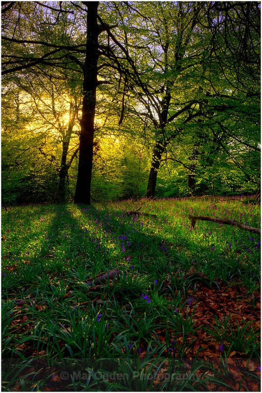 Pinfield Woods #05 - Worcestershire