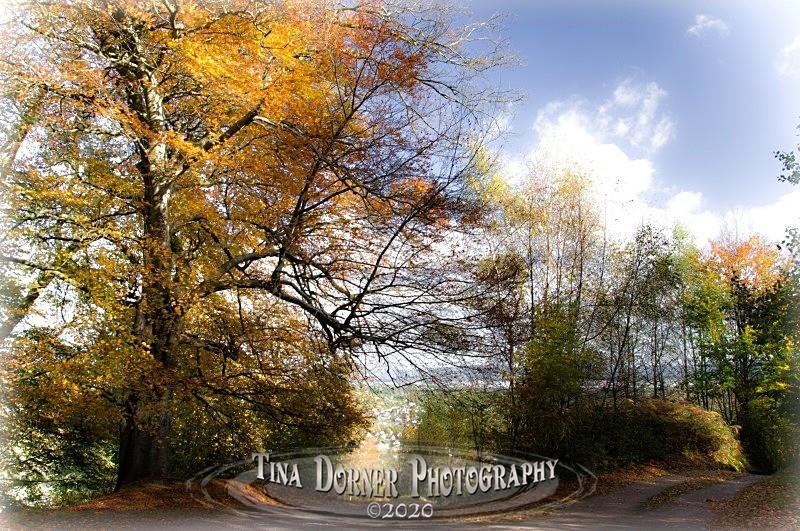 Autumn Forest of Dean. Tina Dorner Photography