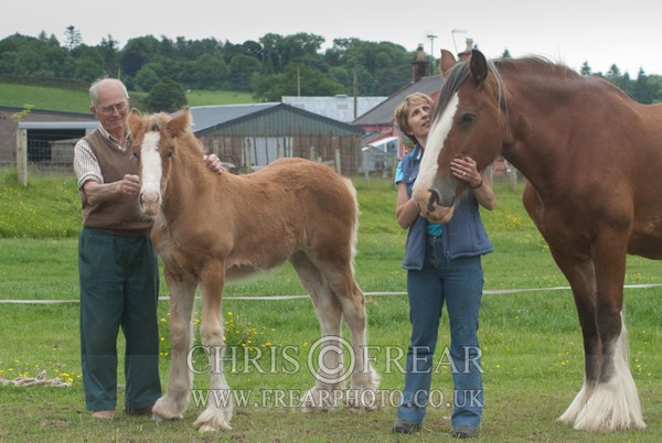 ryecroft-9 - Clydesdales 2013 Include Foals