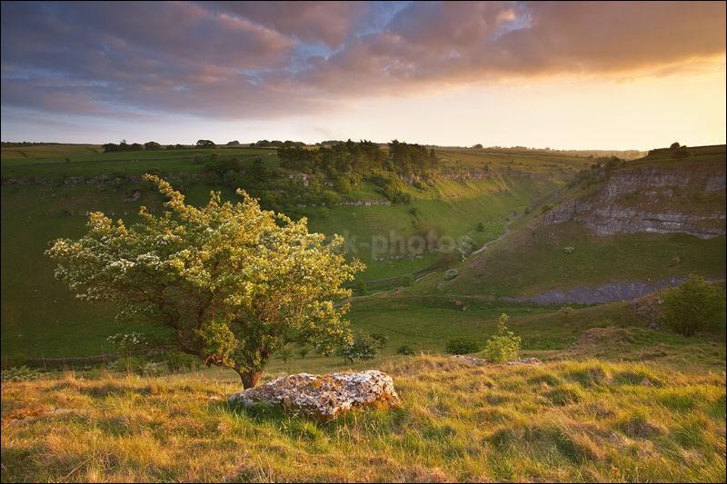 Lathkill Dale Hawthorn - Peak District | White Peak