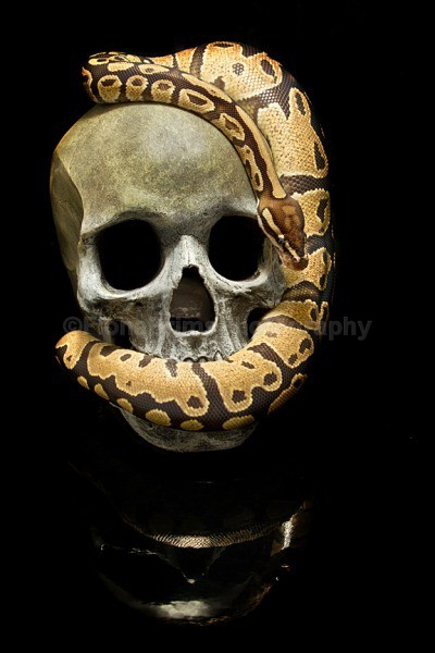 speak no evil - Reptile Photography