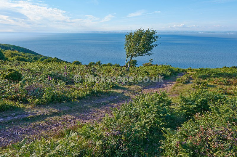 Photo of the wild Exmoor coast from North Hill|  Exmoor Landscape Photography
