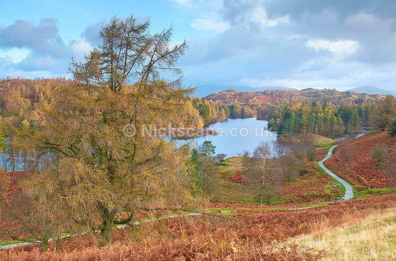 Autumn Morning at Tarn Hows - Lake District - - Lake District National Park