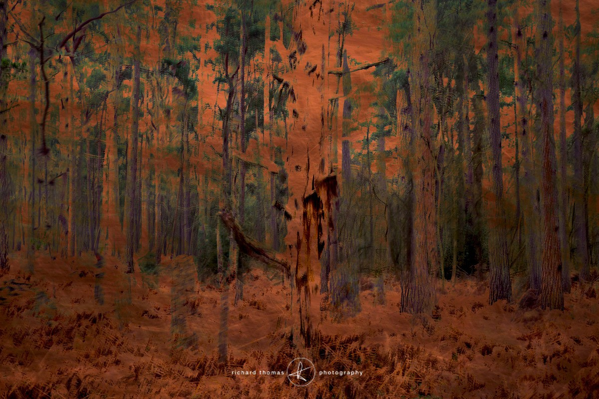 Copperplate forest - ALTERED REALITY