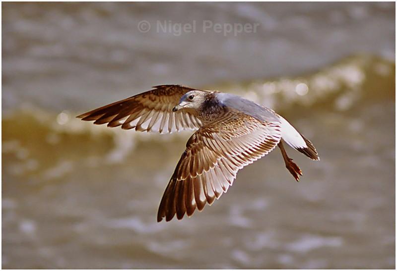 Perfect Pose - Gulls