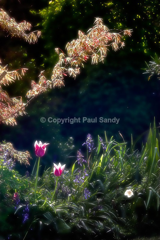 In the garden - Featured Images