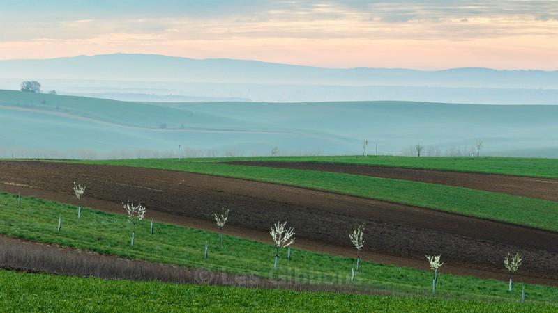 dawn glow - Moravia