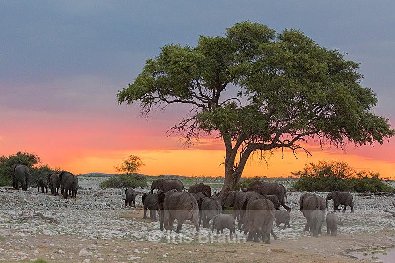 Sunset - Elephant