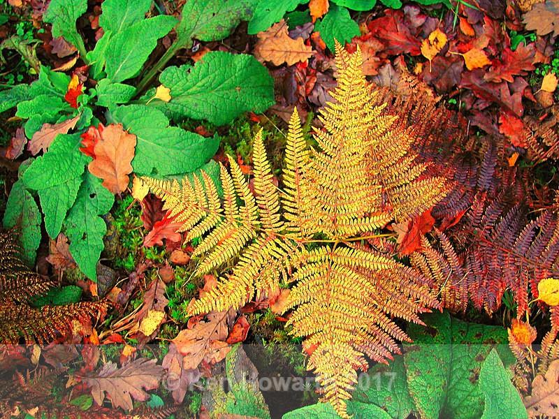 Golden Ferns - Natural World