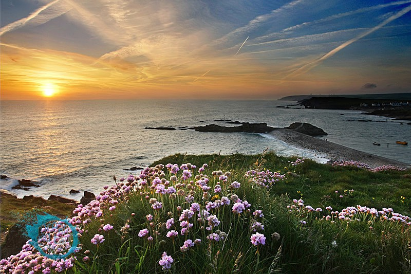 Thrift - Seascapes
