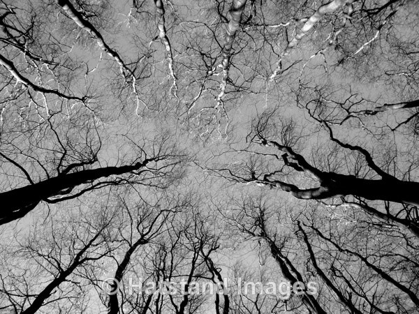 Trees of Life - nature