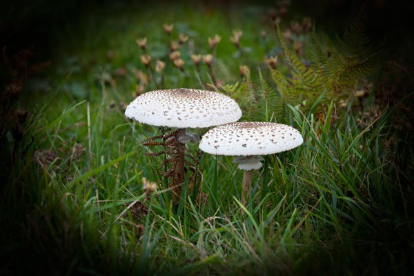 Fungi - Latest Pictures