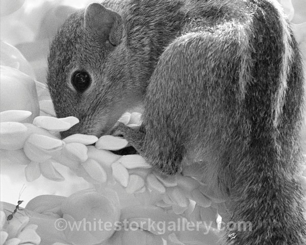 The Squirrel and the Ant - Wildlife and Animals