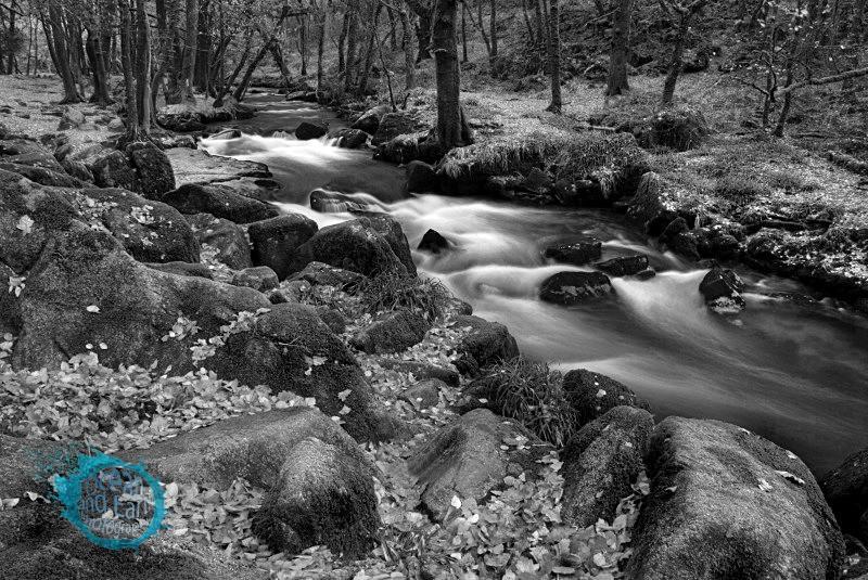 Autumn Woodland B&W - Black and White