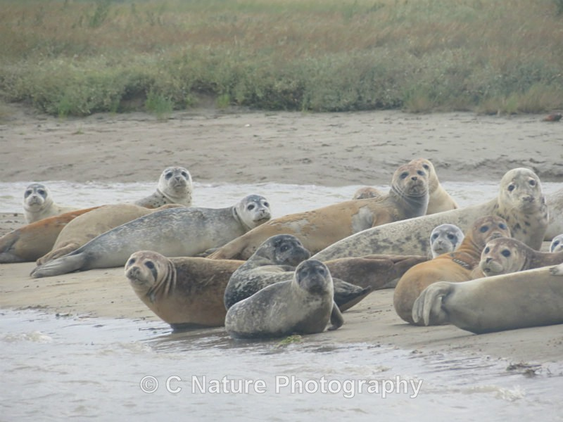 Seal Group - Animals