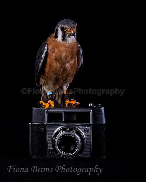 wow studio-17 - Birds of Prey