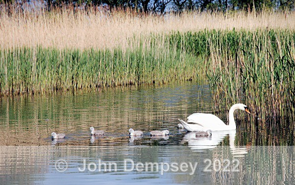 Cygnets2008 1 - The Curlie