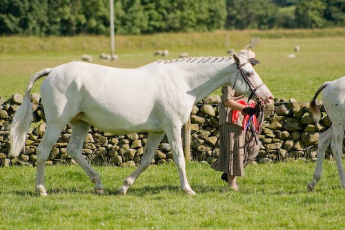 160 - Moniaive Horse Show 2008