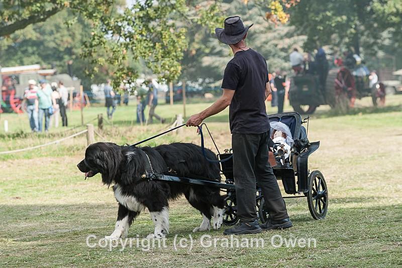 Steam Fair-256 - Bedfordshire Steam and County Fair 2014