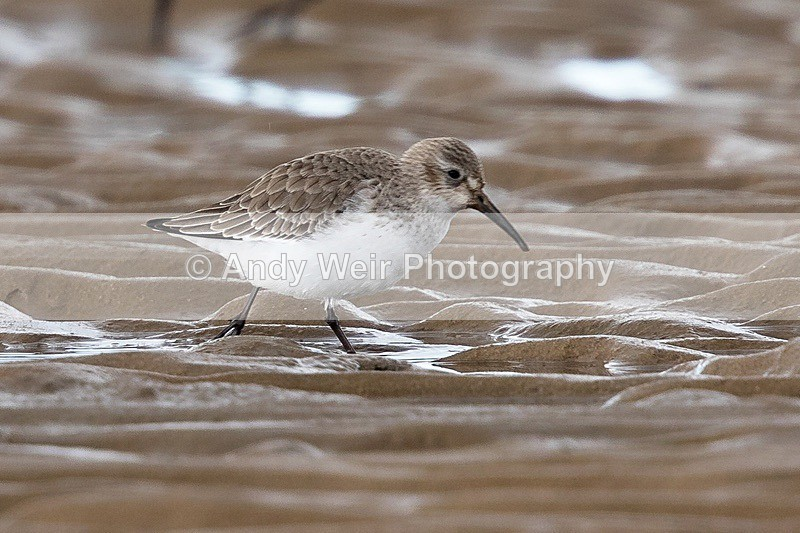 180307-Wirral0105 - Latest Photographs