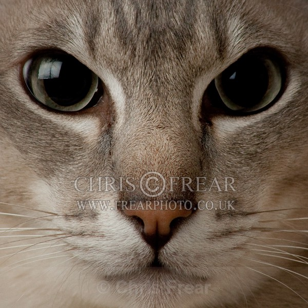 Mouse Eye View of Cat - Cats