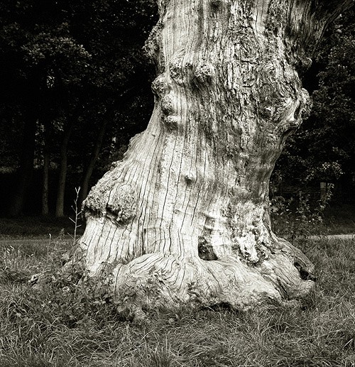 Tree Trunk - The Black & White Gallery
