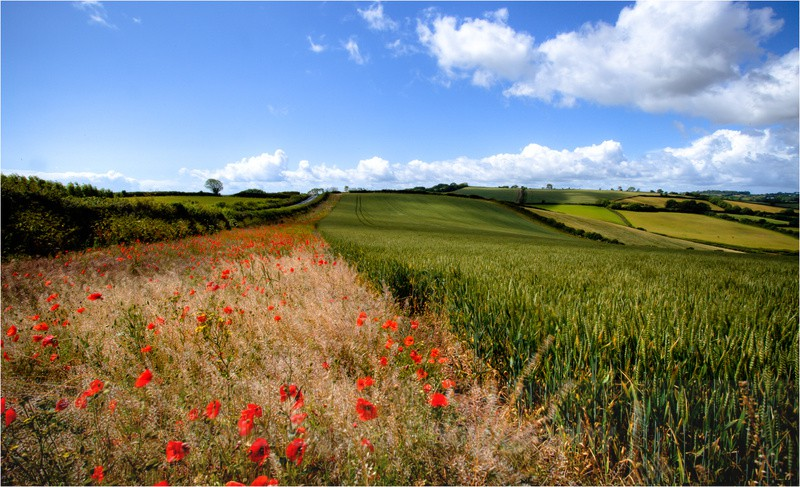 Poppyfields - South and Southwest