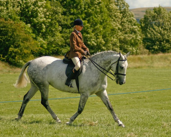 5 - Equestrian Photography