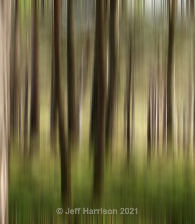Blurry woodland (image Abstract 14) - Abstract