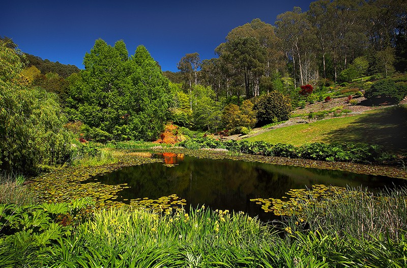 Mt. Lofty Lake1-0226 - TREES, FLOWERS AND PLANT PHOTOS