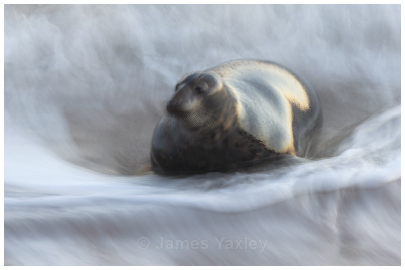 Seal and Surf - Creative