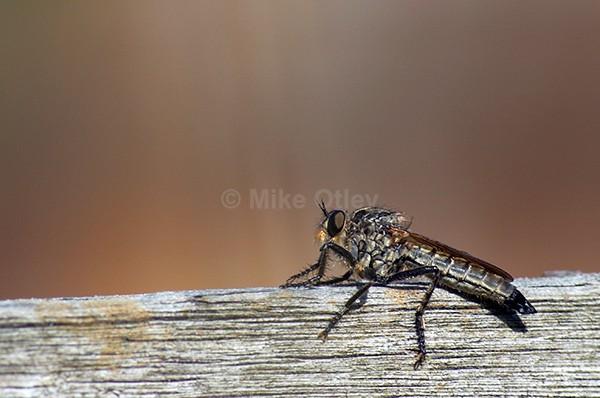 Bug! - Flora & Fauna...